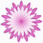 MFG blomma